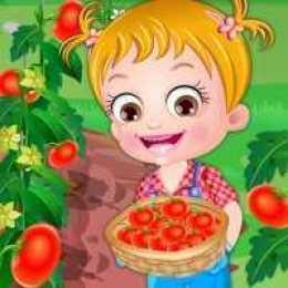 Baby Hazel Tomato Farming Time