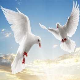 Flying Birds Slide